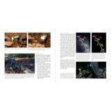 Flitsen, Praktijkgids voor natuurfotografen - van Hoof & van der Wielen - thumbnail 5